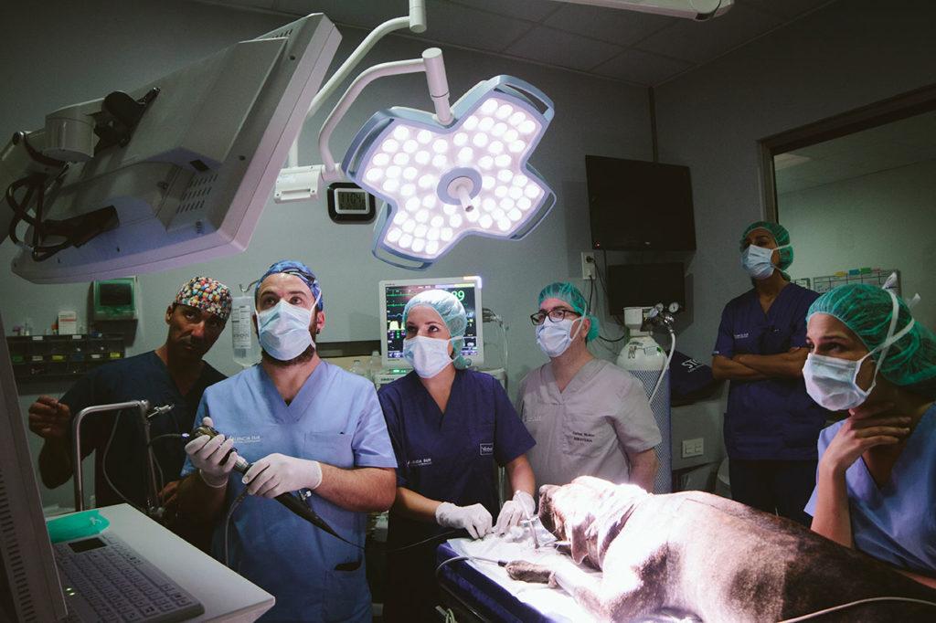 Valencia Sur incorpora la unidad avanzada de cirugía mínima invasiva veterinaria de la empresa Storlz