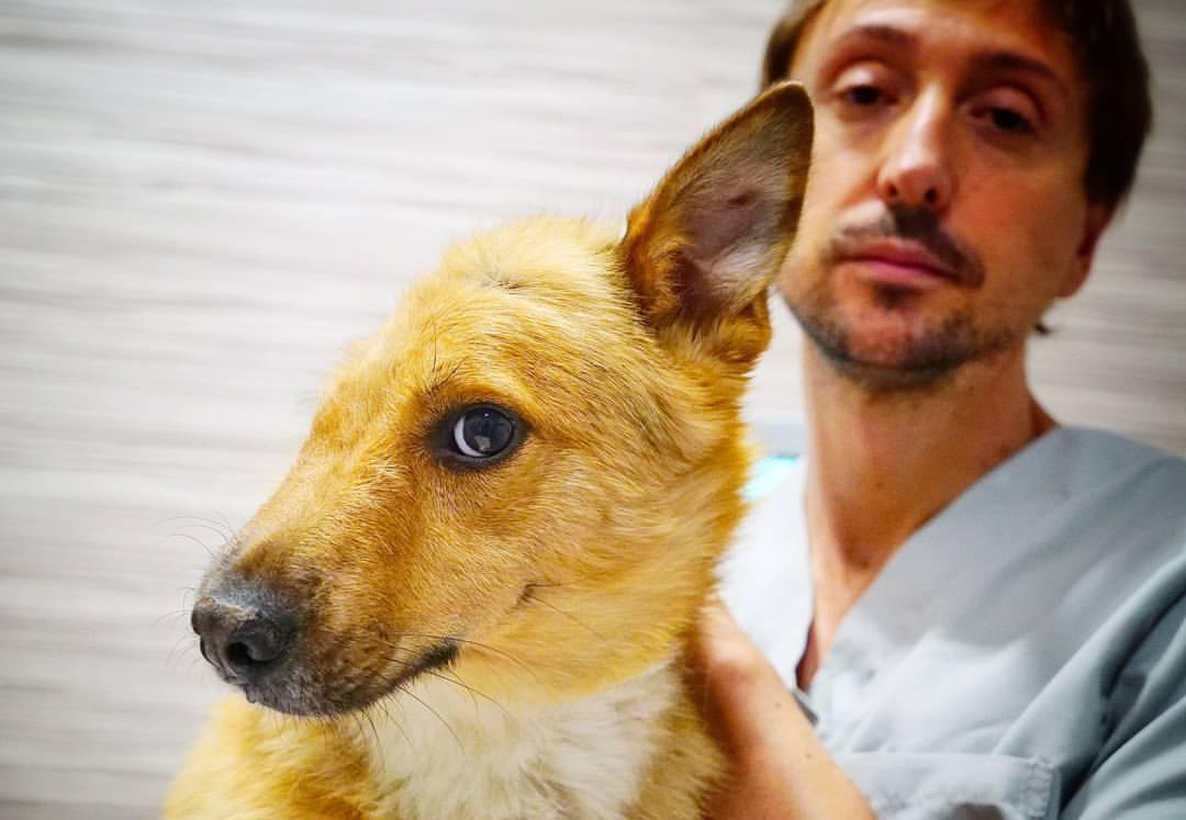 Spirit el perro con media cabeza con el cirujano veterinario Jorge Llinás Ceballos