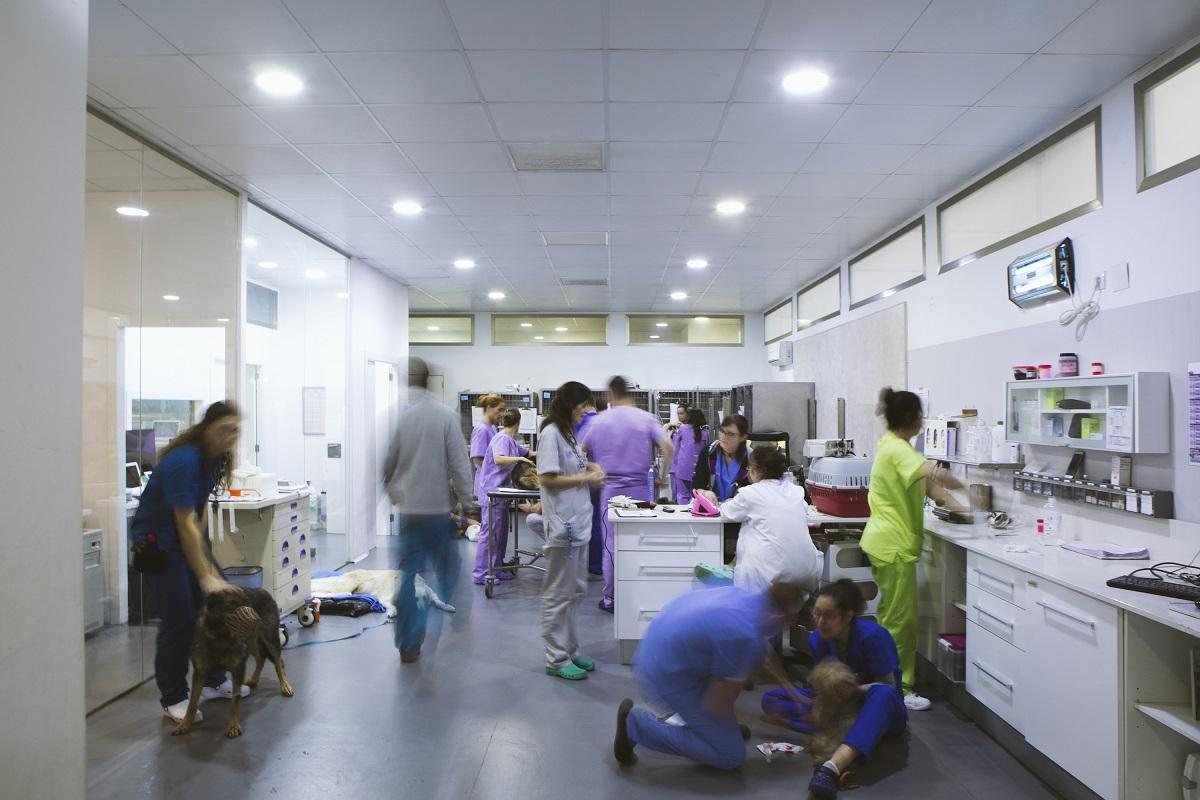 urgencias hospital veterinario
