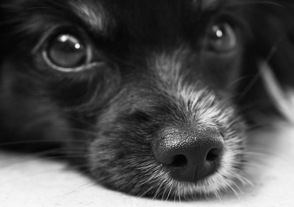 unidad de hemodialisis para perros y gatos 1