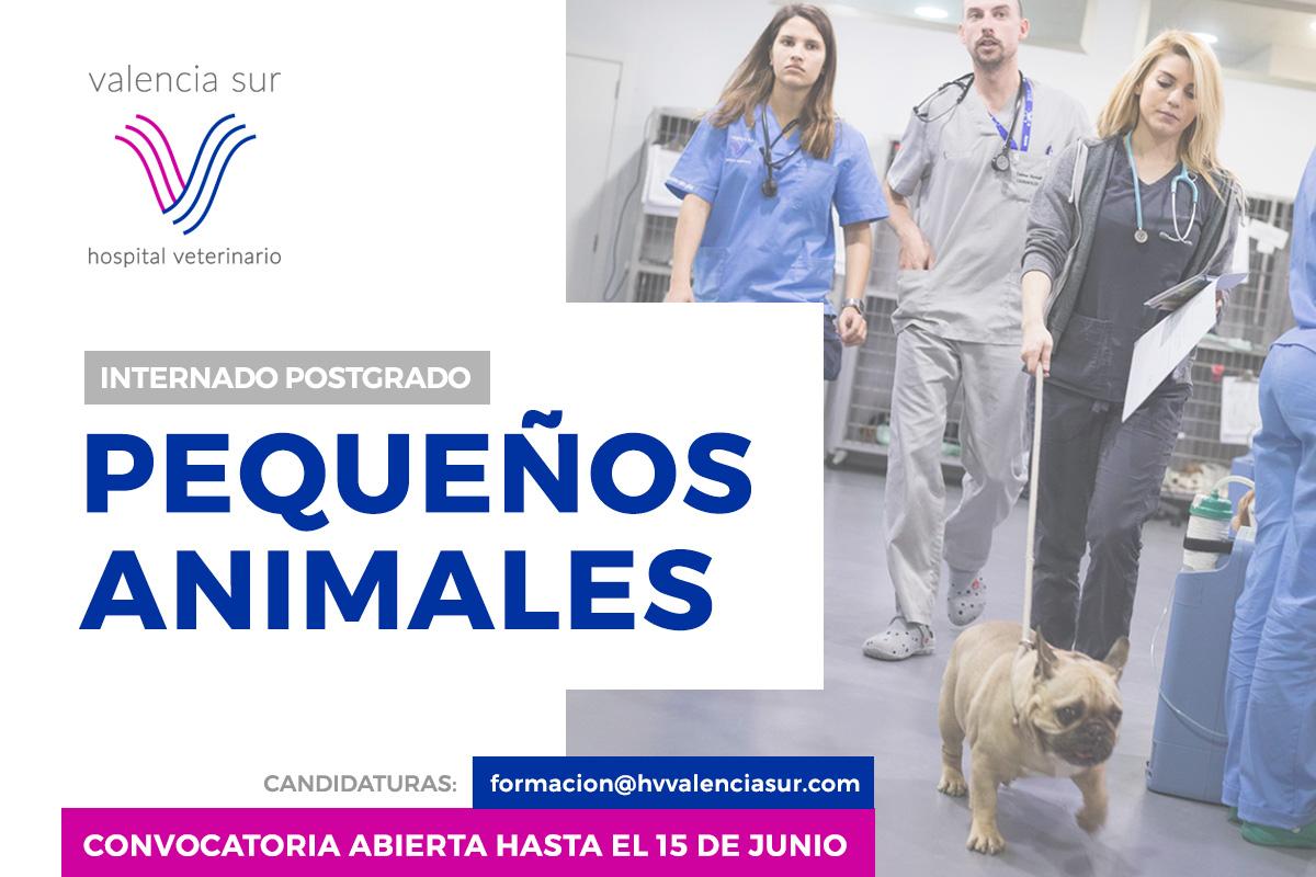 Convocatoria Internado Postgrado Pequeños Animales Hospital Valencia Sur