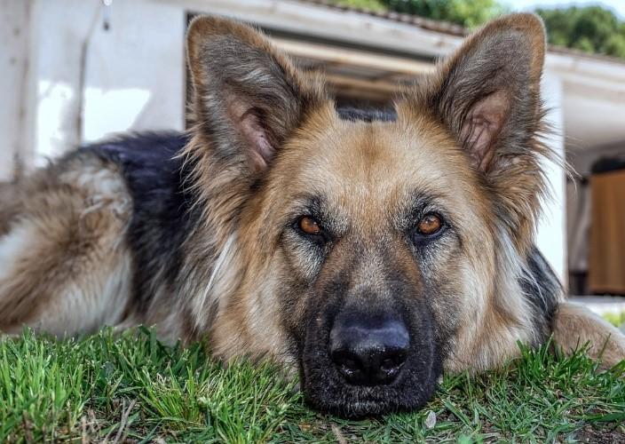 epilepsia en perros 1