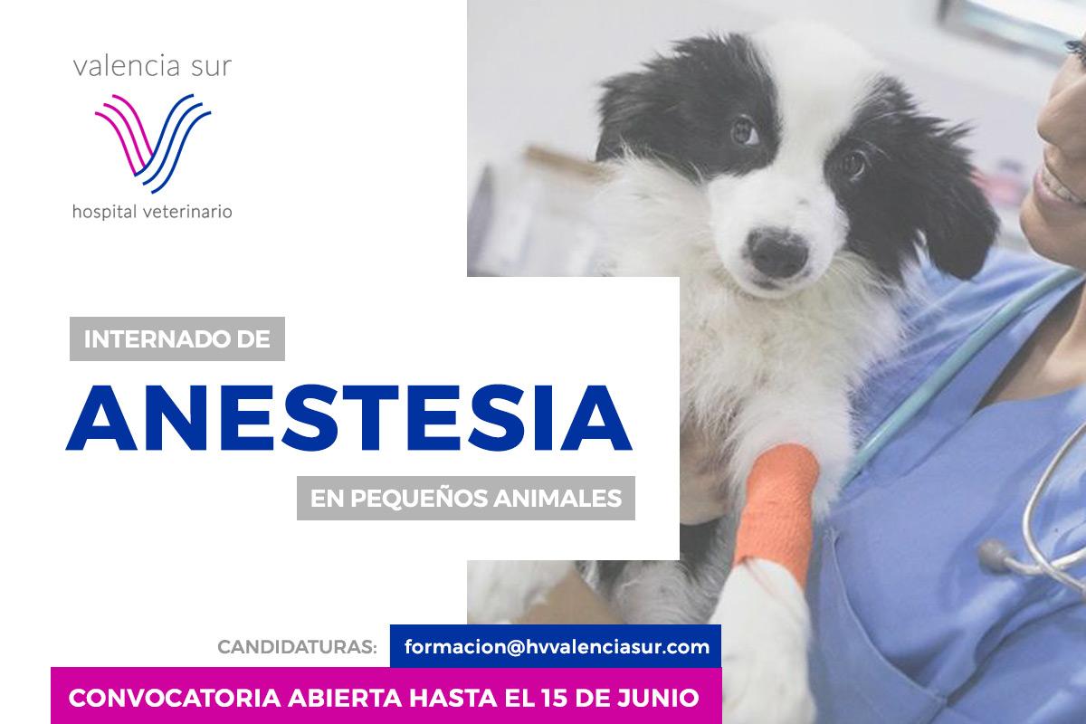maPlaza de internado de Anestesia en pequeños animalesdre Internado