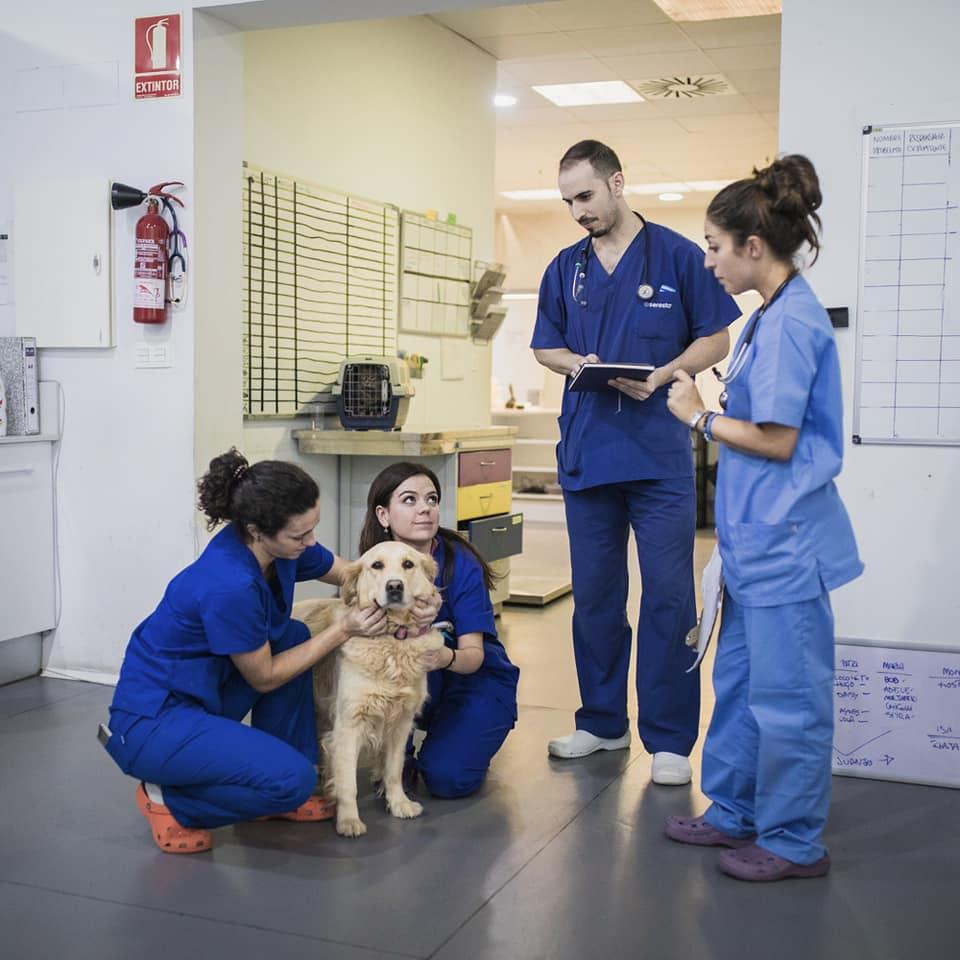 rocio 2, especialista veterinario medicina interna