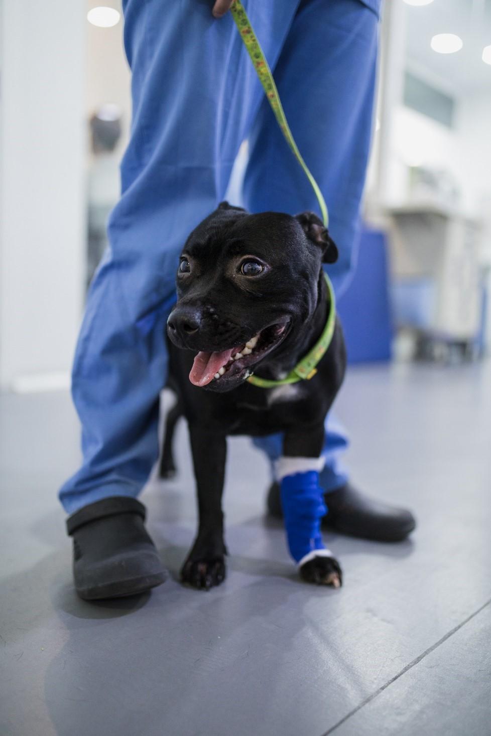lua remodelacion paladar- cirugia veterinaria