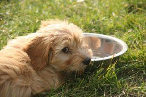 Halitosis en perros a que puede ser debido 2