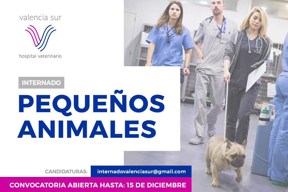 Imagen: Convocatoria Internado de postgrado en Clínica de Pequeños Animales en el Hospital Veterinario Valencia Sur.