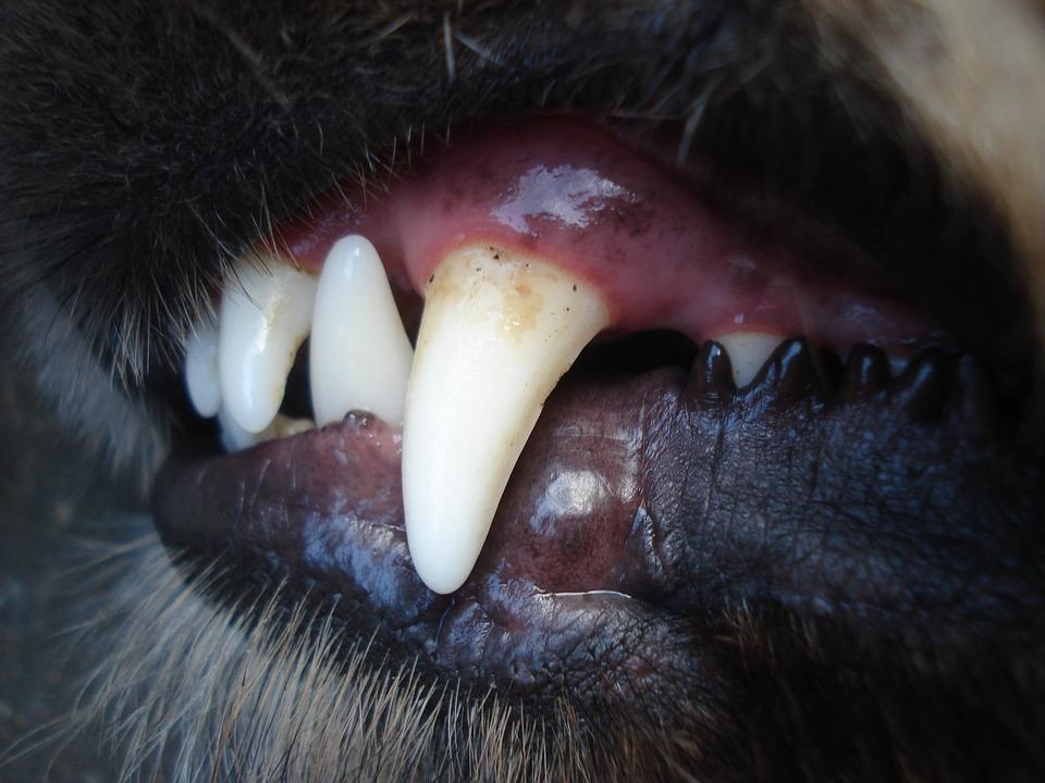 Razones para cuidar la higiene dental de los perros 1