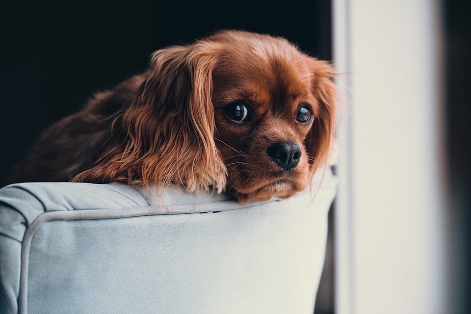 Se puede prevenir la leishmaniosis canina 1