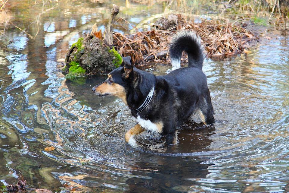 Se puede prevenir la leishmaniosis canina 2