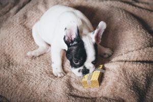 En Navidad adopta mascotas con responsabilidad 1 1