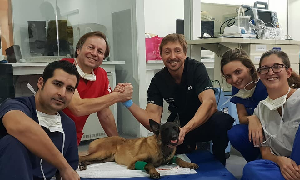Reconstrucción maxilofacial de un perro la historia de Leslie 1