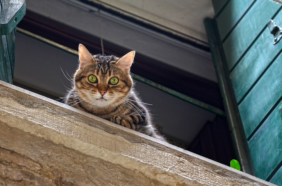 Tres de las urgencias veterinarias más frecuentes en gatos 1