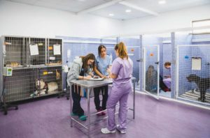 Anicura Hospital Veterinario Valencia Sur Servicio UCI Hospitalizacion