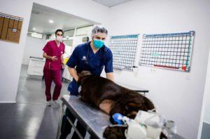 Anicura Hospital Veterinario Valencia Sur Servicio Urgencias