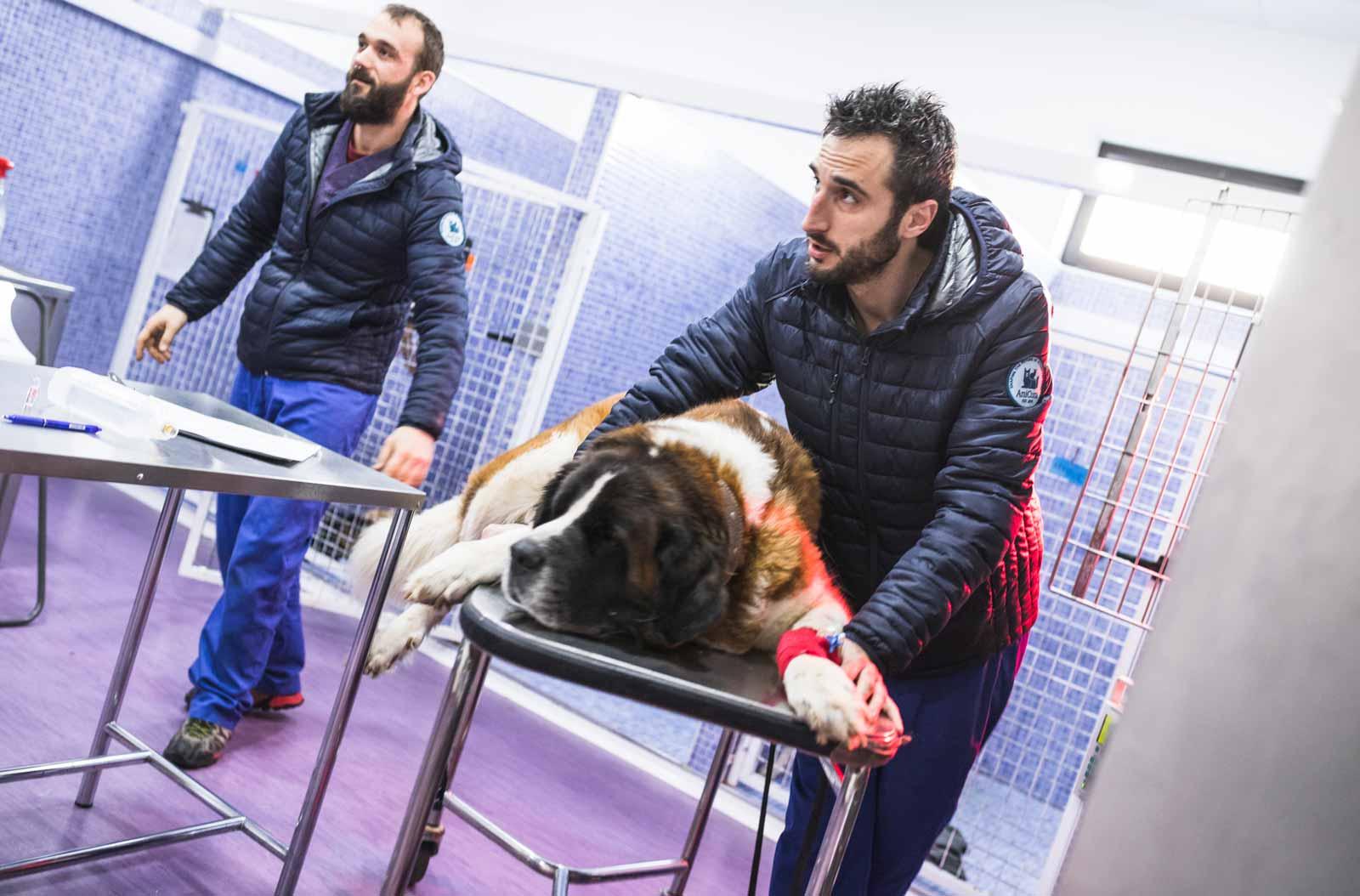Anicura Hospital Veterinario Valencia Sur Servicio Urgencias veterinarias 24 horas