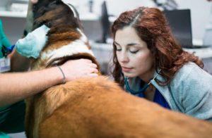 Anicura Hospital Veterinario Valencia Sur Servicio veterinario Medicina interna