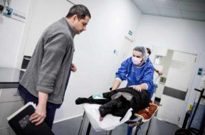 Anicura Hospital Veterinario Valencia Sur Urgencias 24 horas.jpg