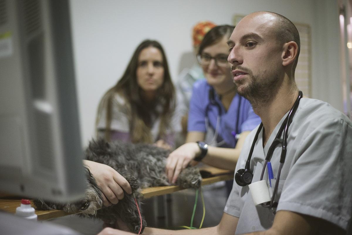 cardiologia veterinaria hospital valencia sur