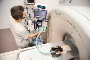hemodialisis veterinaria hospital valencia sur