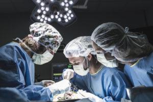 neurologa neurocirugia veterinaria