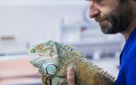 web animales exoticos valencia sur