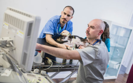 web cardiologia veterinaria valencia sur