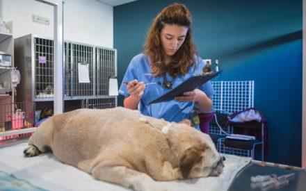 web hospitalizacion uci veterinaria valencia sur