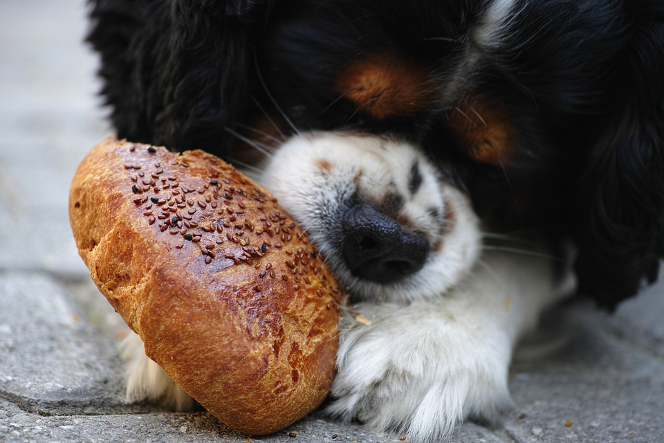¿Afecta el sobrepeso a la salud de mi perro 1