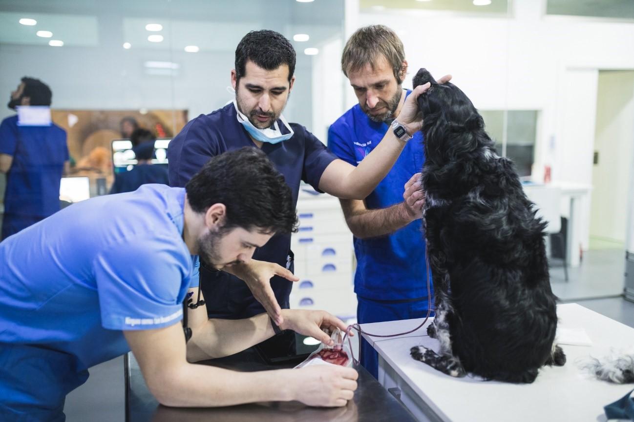 donación sangre perros 2