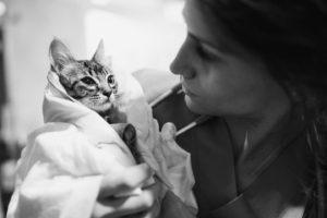 ampliacion valencia sur cat friendly