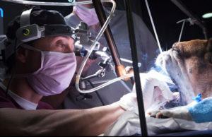 Hospital Veterinario Valencia Sur - Casos referidos y Urgencias 24h