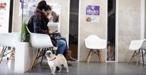 snooky cirugia veterinaria destruccion maxila