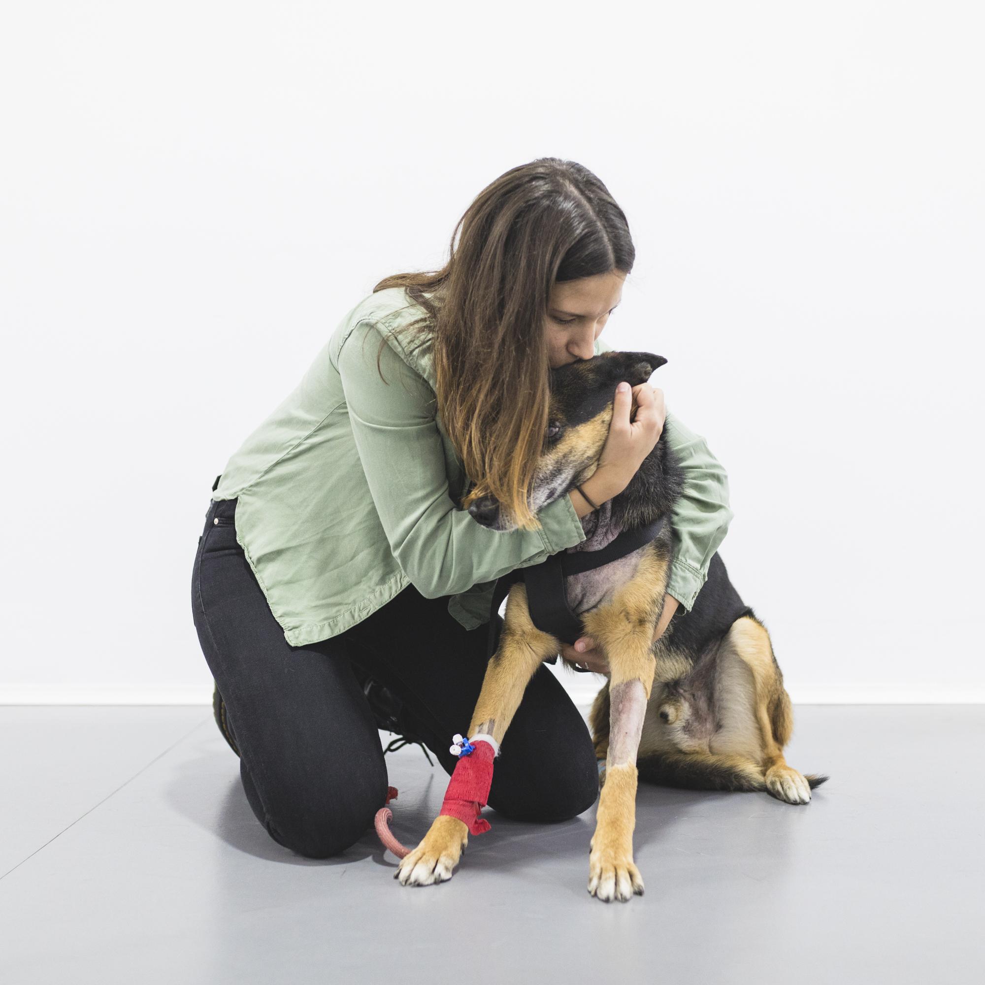 hernia cervical perros