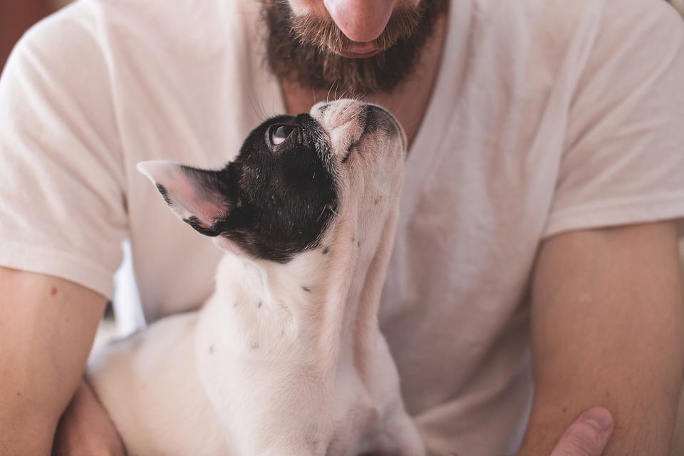 Riesgos de automedicar a las mascotas 2