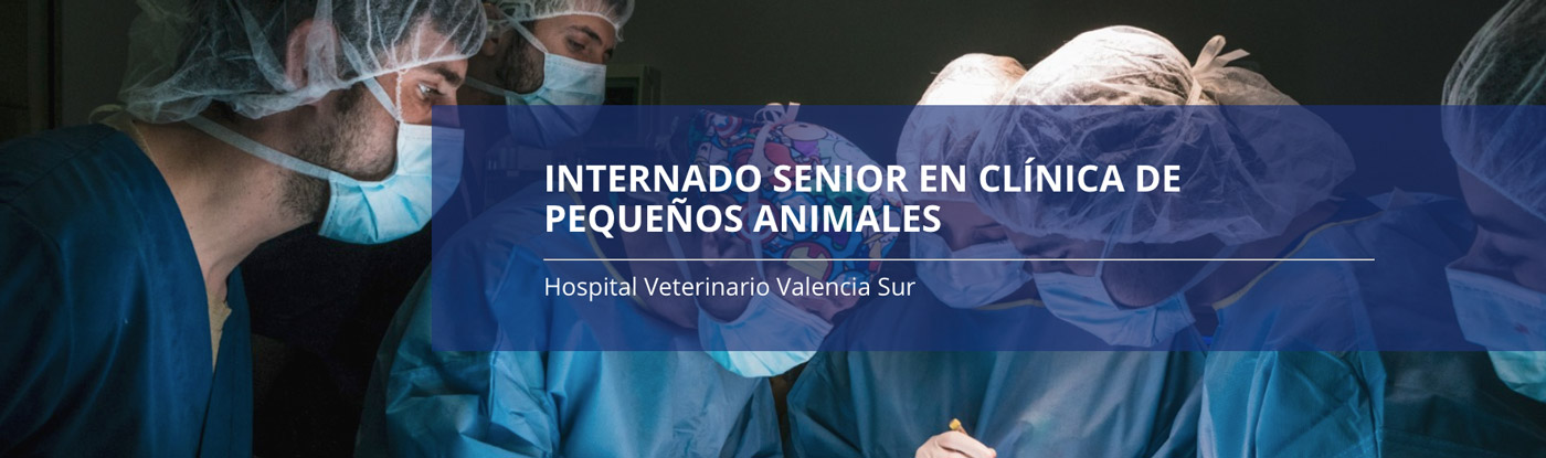 internado senior clinica pequenos animales valencia sur