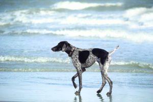 urgencias veterinarias en verano