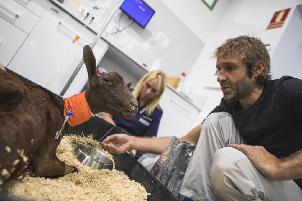 hospital veterinario atención todo tipo de animales