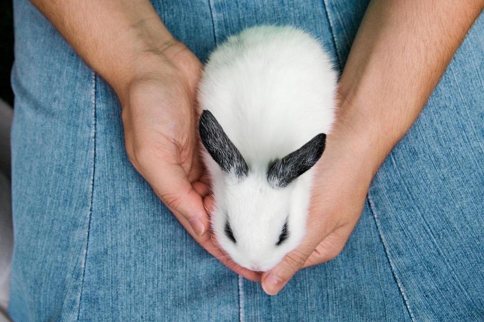 alimentos que no dar a un conejo