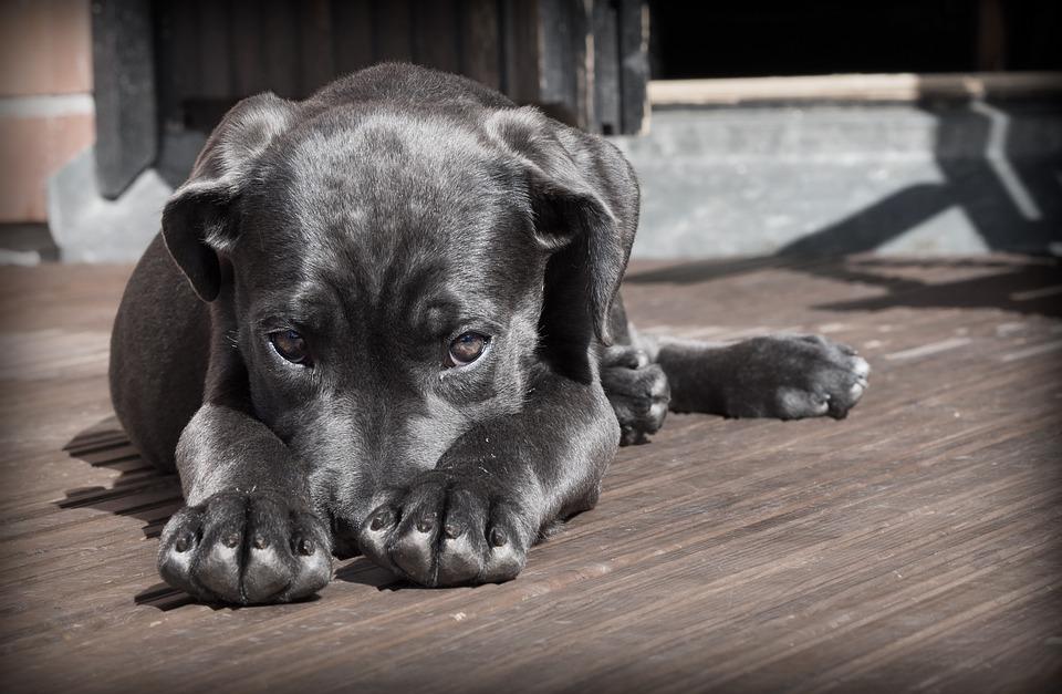 prevenir parasitos en perros