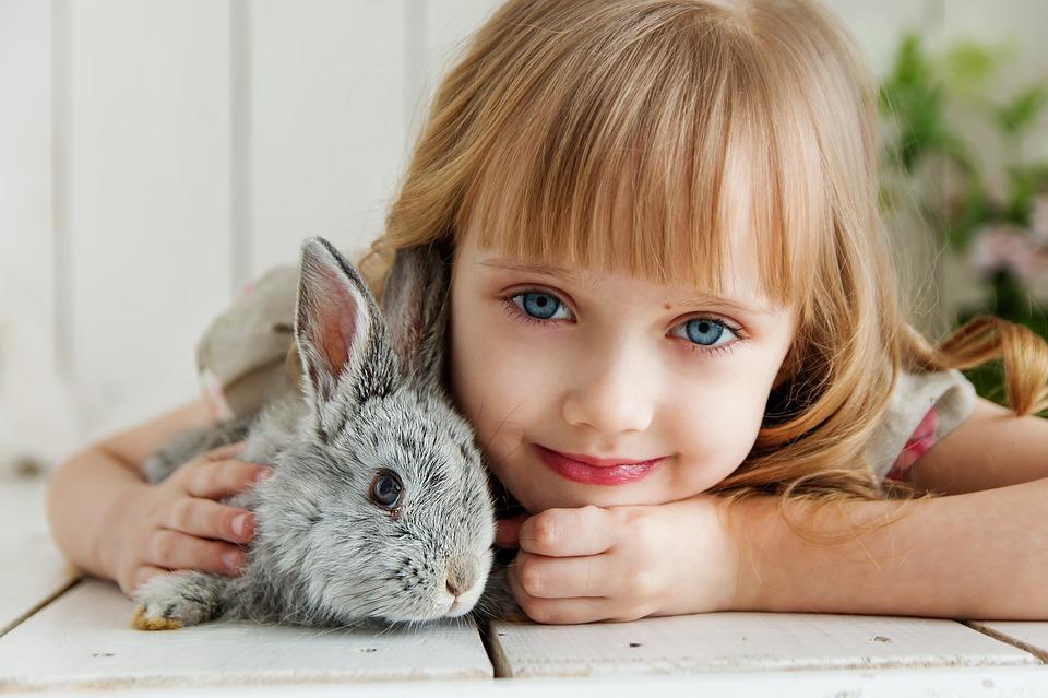 veterinarios para conejos 24 horas