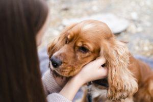sitomas hernia discal en perros 1