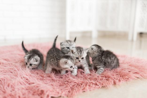 enfermedades gatos recien nacidos