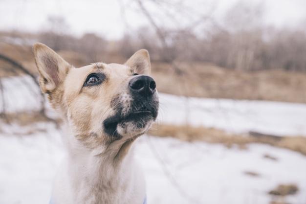 enfermedades perros comunes en invierno
