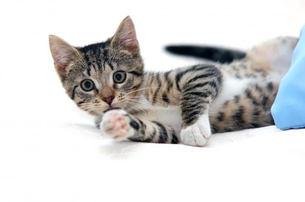 gatos y alimentos