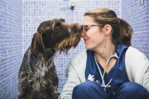 Anicura Hospital Veterinario Valencia Sur un simbolo del amor por los animales