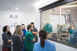 Anicura Hospital Veterinario Valencia Sur Formacion
