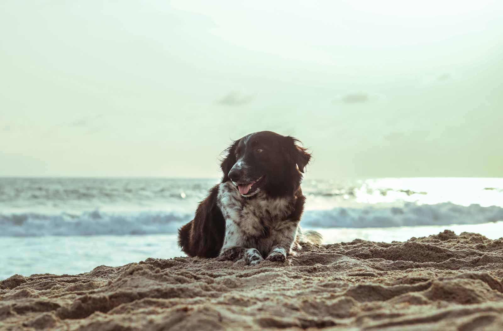 anicura hospital veterinario valencia sur mascotas verano
