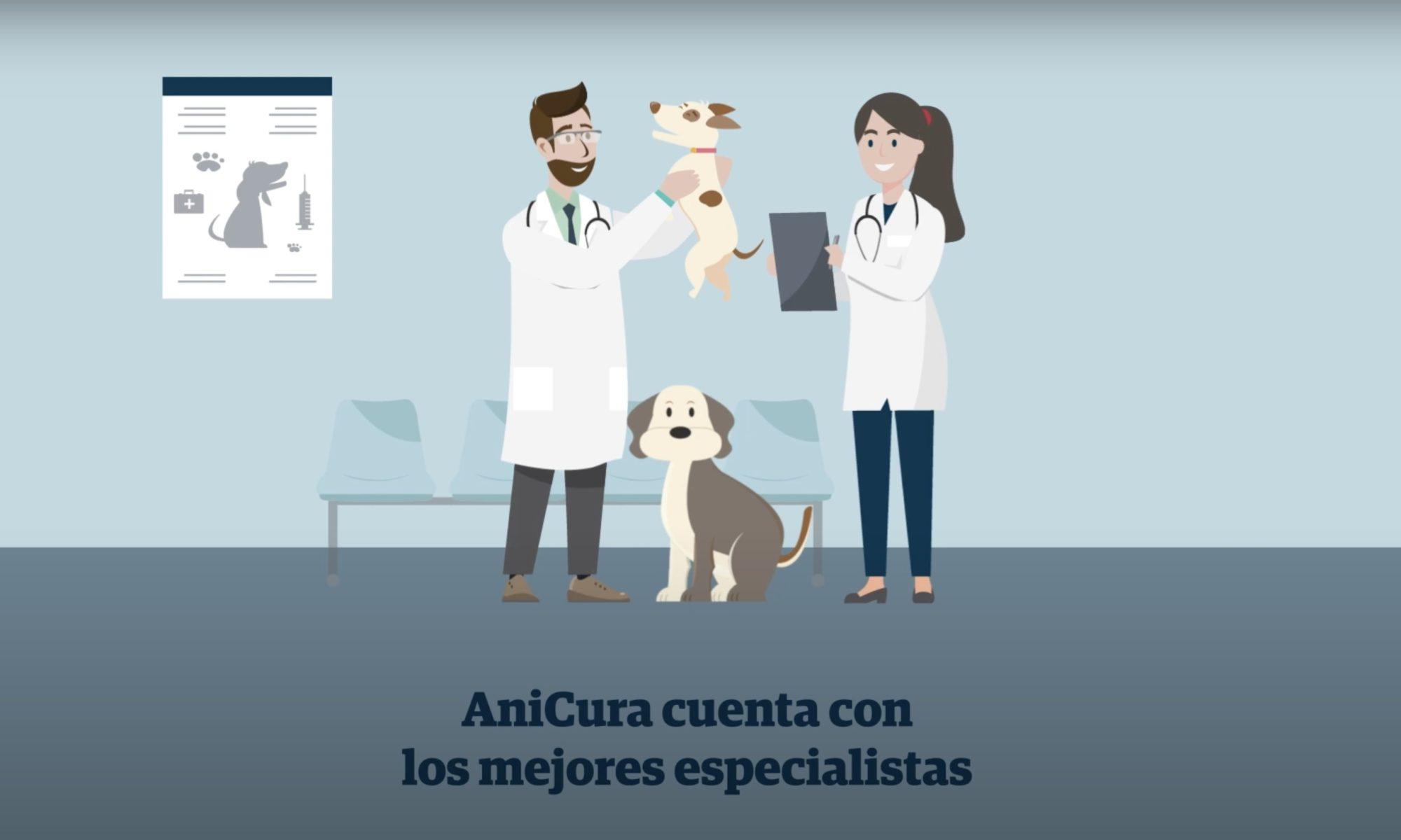 veterinario especialista